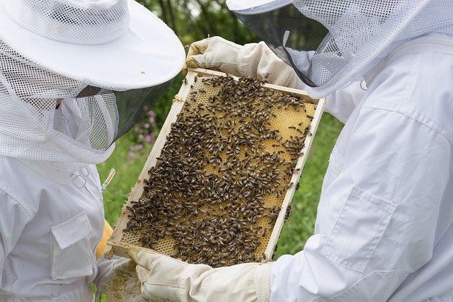 Implantation de ruches au château !